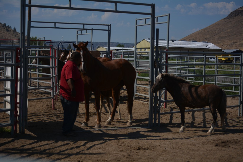 Warm Springs, when we met with Jason Smith and his cowboy crew at their handling facility